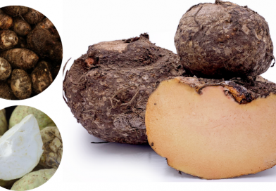 Benefits of Yam (Jimikand)